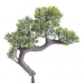 124CAN100MX Bonsai 20cm green
