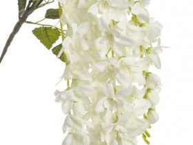 92CAN25005 Wisteria  72cm  wh