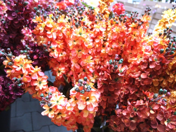 Nová kolekce letních květin právě dorazila!