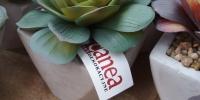 Kolekce umělých sukulentních rostlin