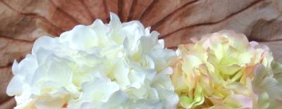 Hlavičky hortenzií se zařazují mezi stálý a oblíbený sortiment
