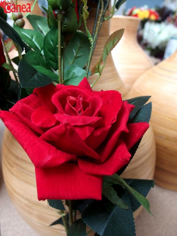Něžné červené růže, kterým neodoláte