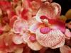 Orchideje - Top i mezi umělými květinami