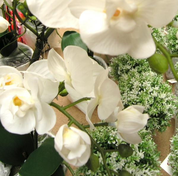 Orchideje jako živé...